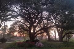 azalea-sunset
