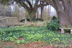 Swing on a massive oak branch