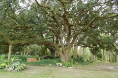 oaks-swing